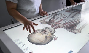 The Anatomage table holds images from four human cadavers.